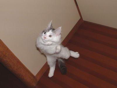 Опции Вверх Вниз.  И опять кошки.