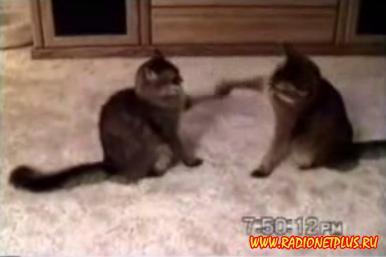 Классная подборка с кошками :)