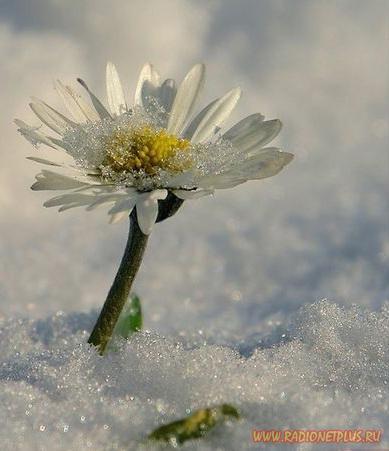 Цветы (15фото)