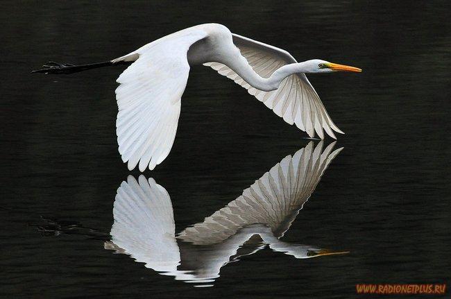Живая природа....