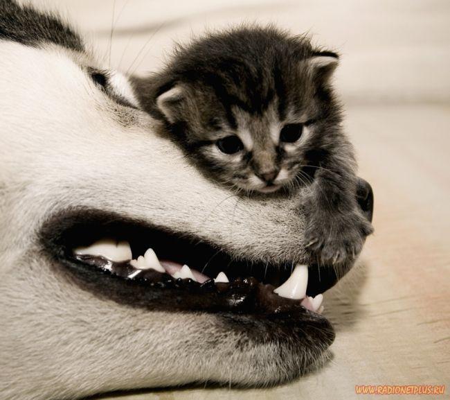 Забавные животные (11 фото)