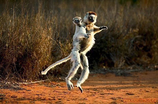 Animal Planet в картинках (126 фото) .