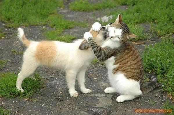 Забавные животные...(13 фото)