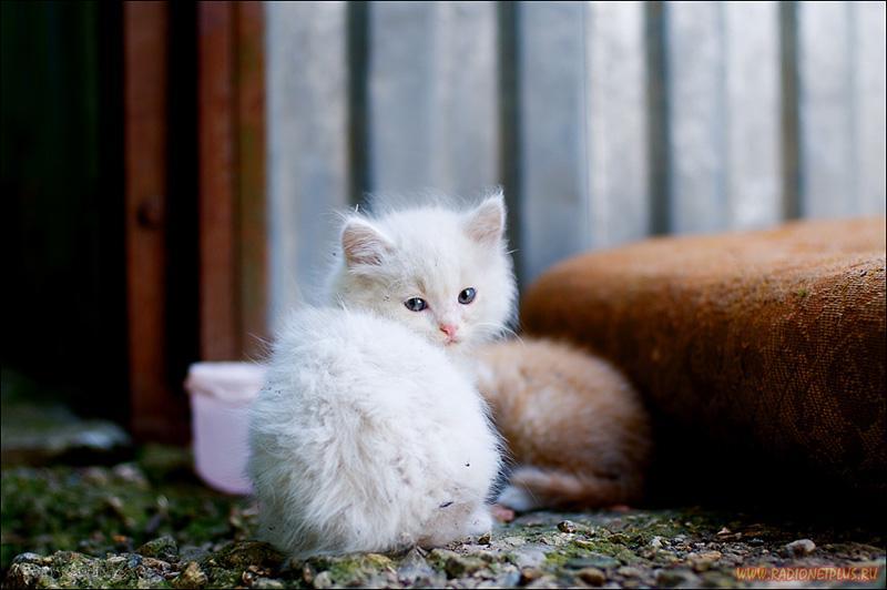 ростов кошки и коты для знакомства