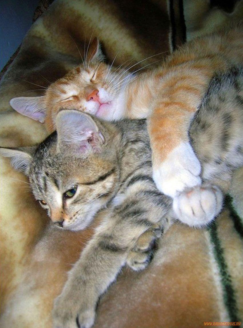 фото с обнимающимися кошками