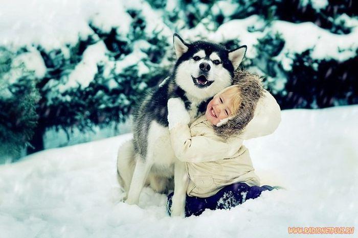Милые собаки хаски фото