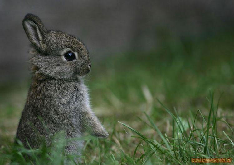 Забавные животные (34 фото)