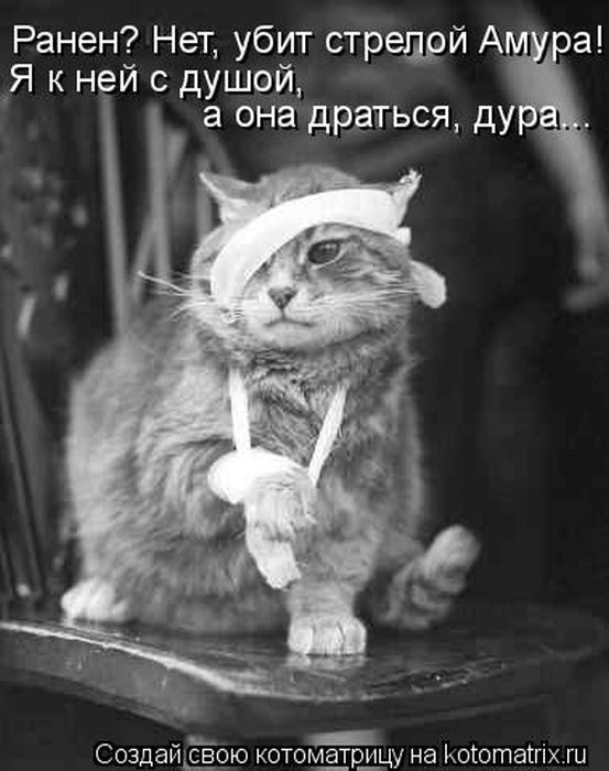 http://www.radionetplus.ru/uploads/posts/2012-03/1332093414_kotomaub.jpg