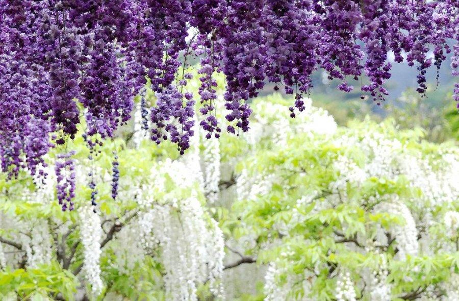 Правильно посадить цветы в огороде
