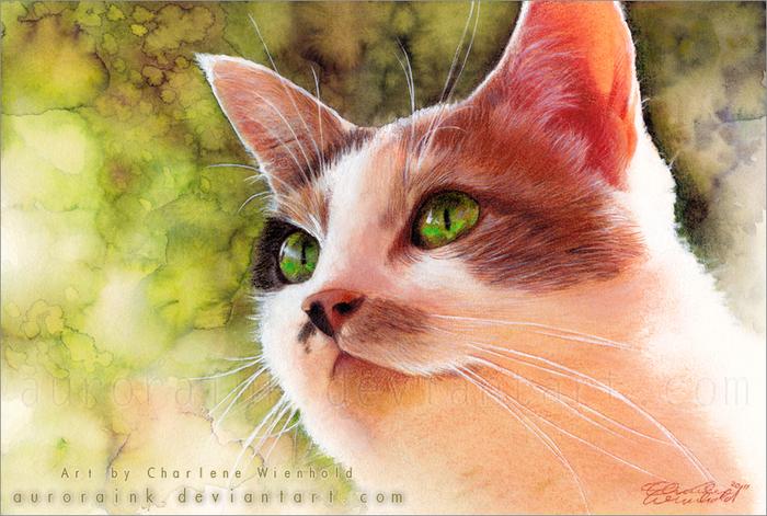 красивые картинки и рисунки животных