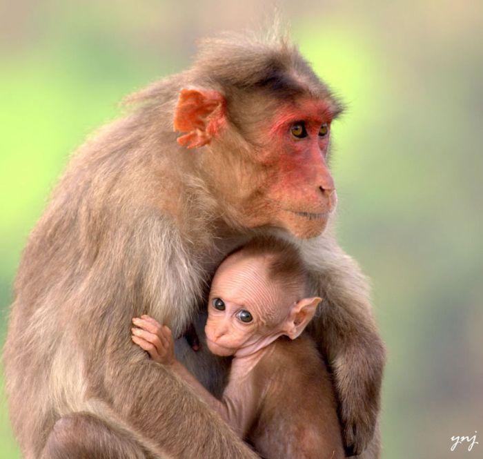 Животные мамы