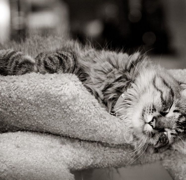 Кошачья подборка