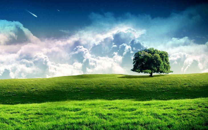 зеленый луг и звездопад