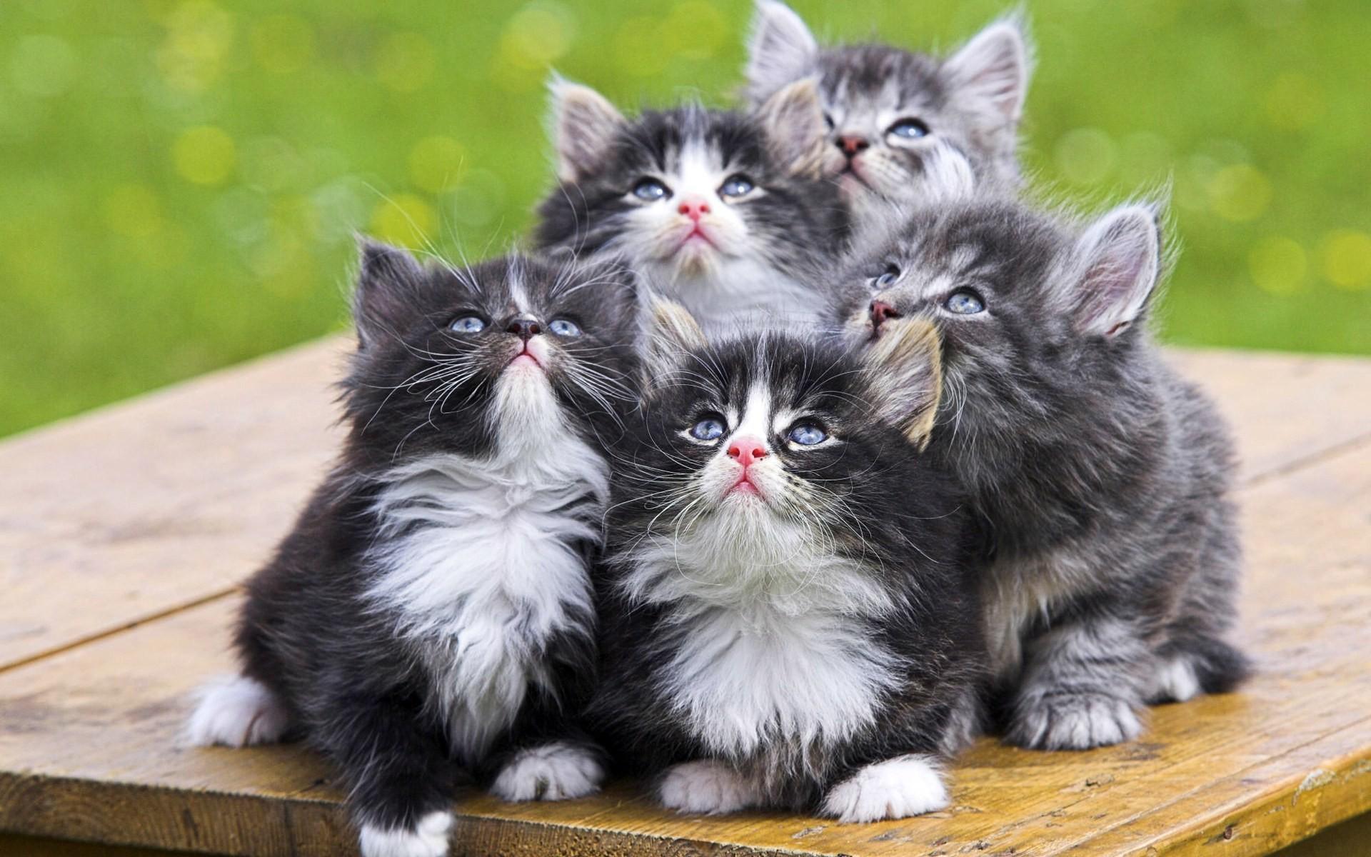 фотообои на рабочий стол кошки: