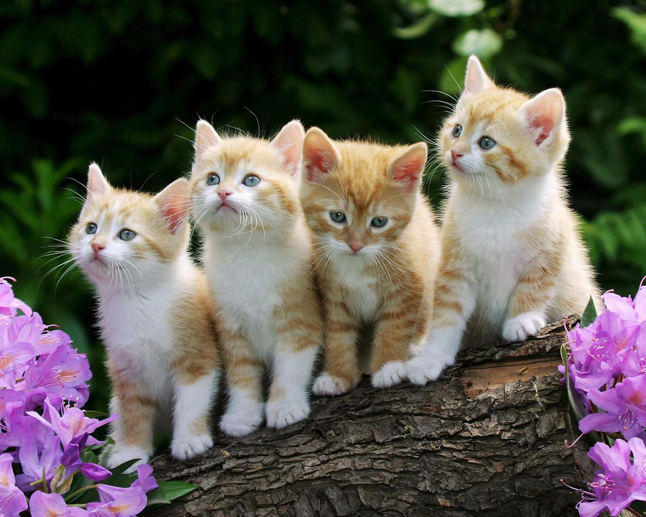 Описание gary patterson коты прочитать