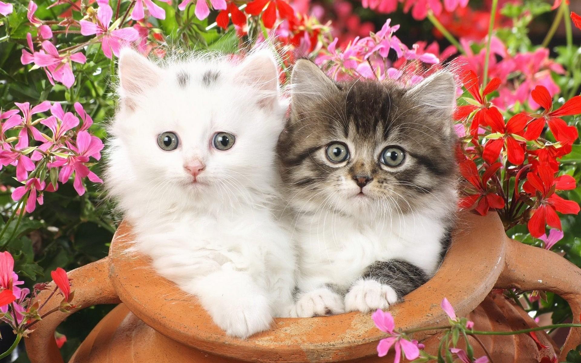 Картинки для рабочего стола природа с кошками