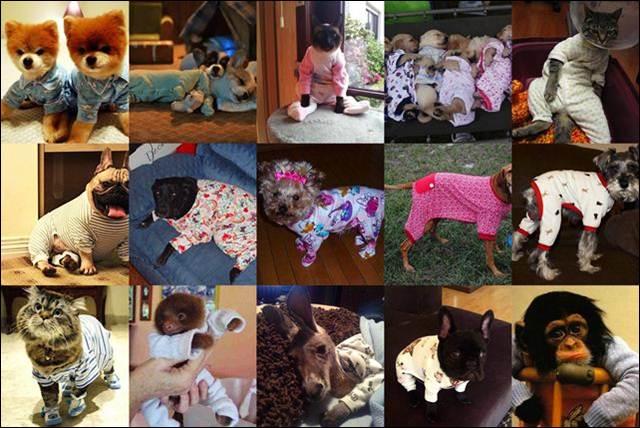 http://www.radionetplus.ru/uploads/posts/2012-08/1344454099_89619072__cats.jpg