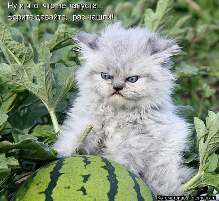 http://www.radionetplus.ru/uploads/posts/2012-08/1344575607_kotomatrix_10.jpg