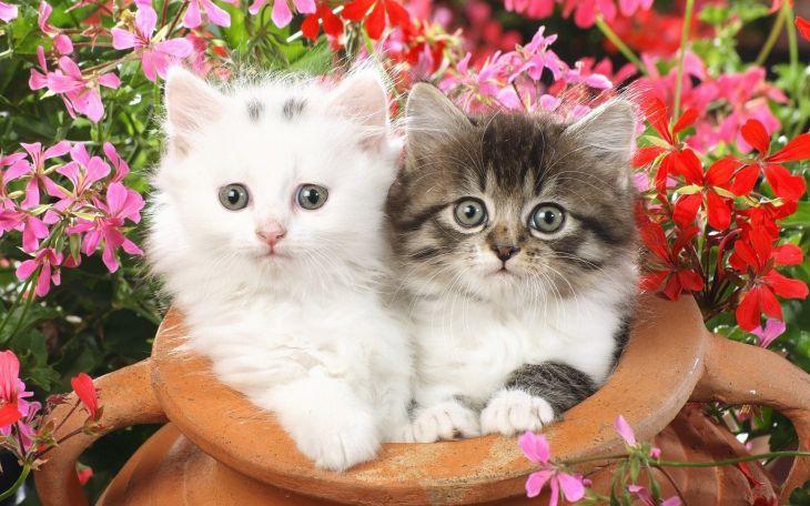 """Большие обои на рабочий стол """"Кошки"""" (25 фото)"""
