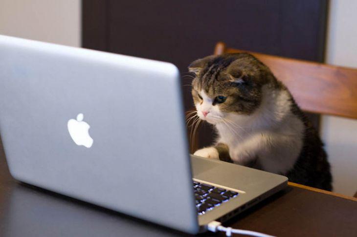 Почему кошки лучше собак