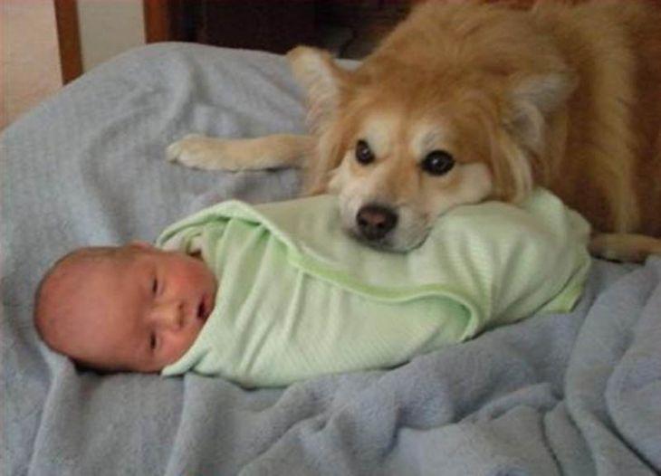 собак и кошек вместе