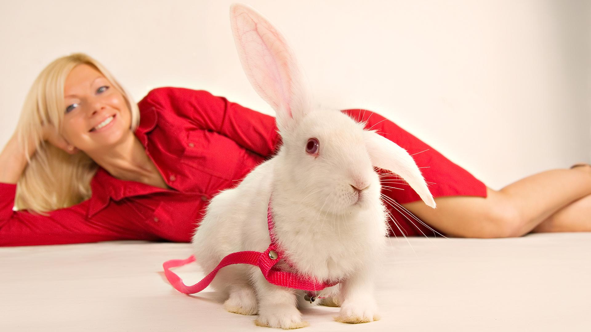 Мультяшная девушка и кролик