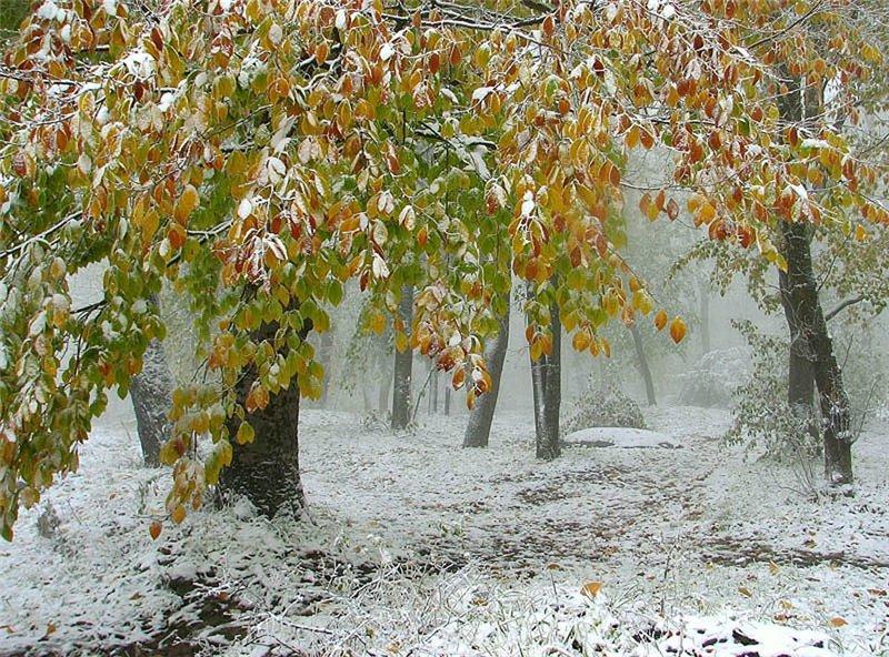 Обои осень первый снег для рабочего стола