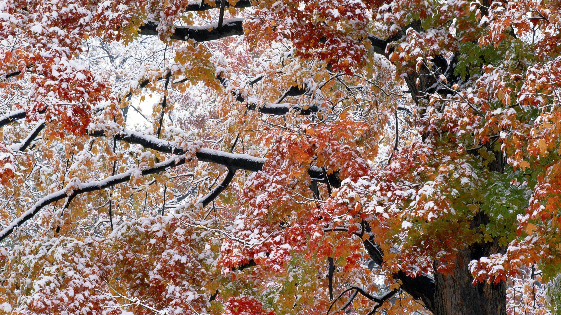 В этом году первый снег выпал раньше, чем в прошлом (ВИДЕО)