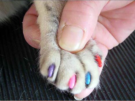 чем стригут ногти кошек фото