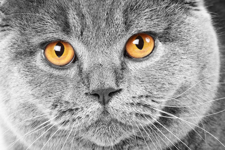 Красивые картинки на рабочий стол животные кошки