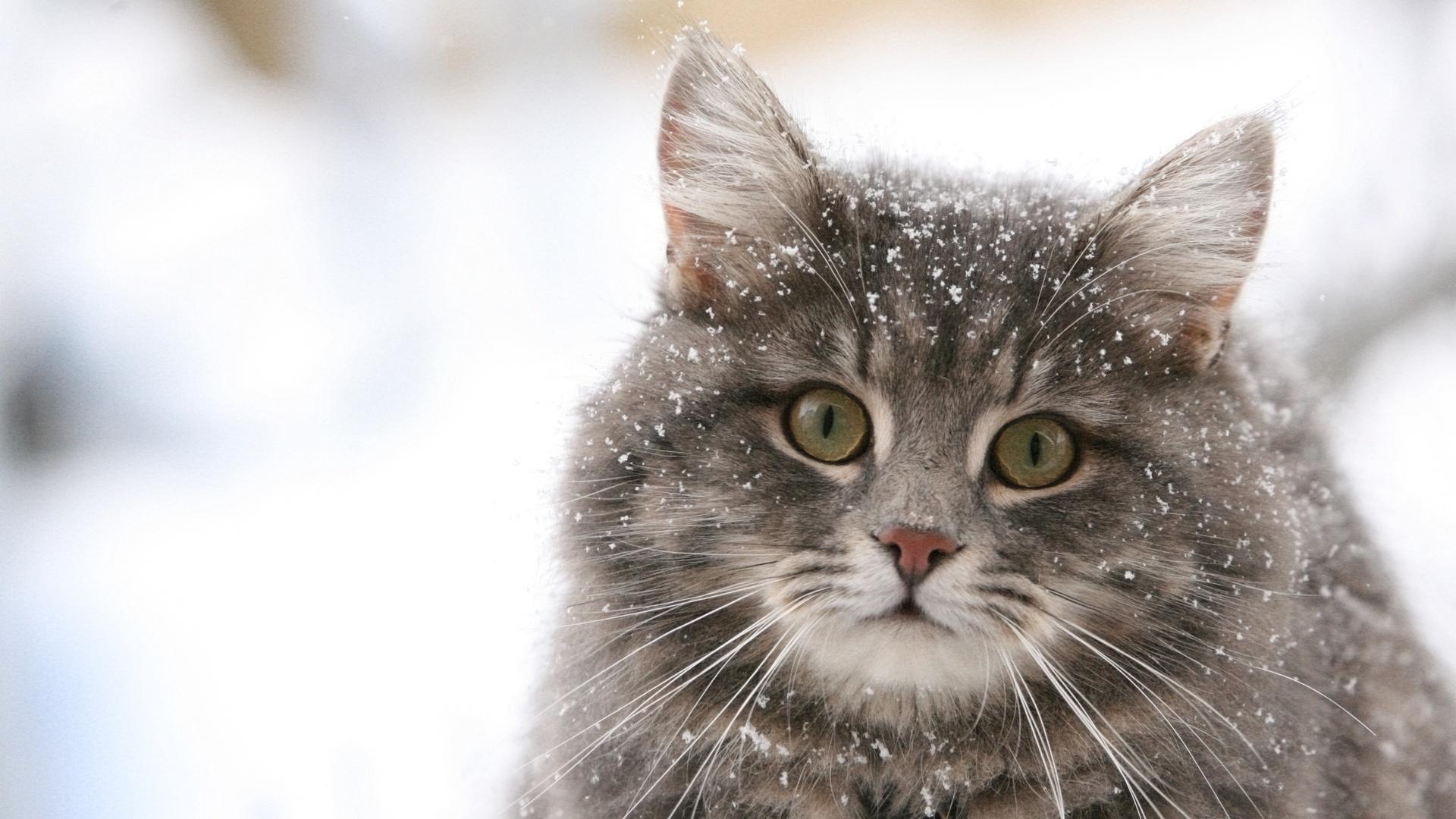 Сонник злой котенок - 3339c