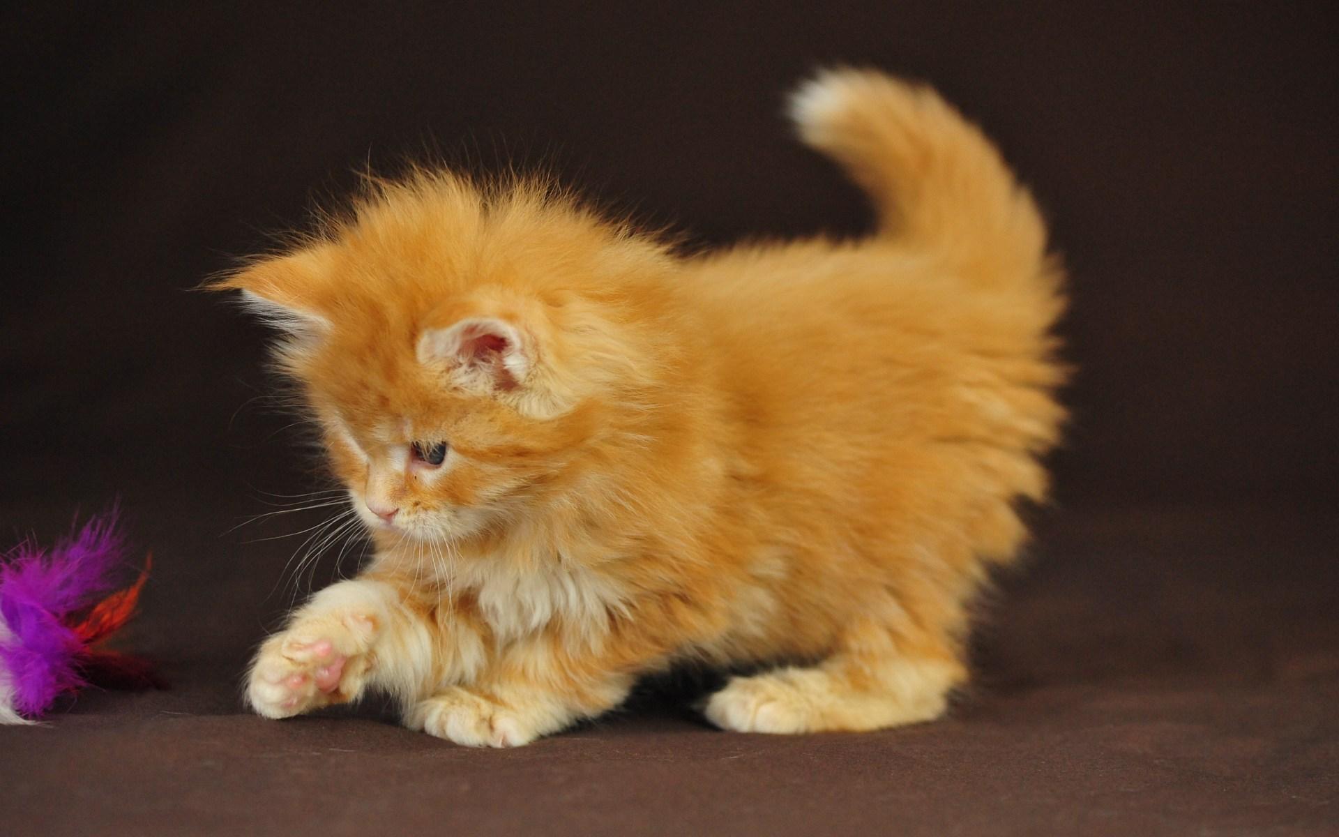 Сонник злой котенок - 34