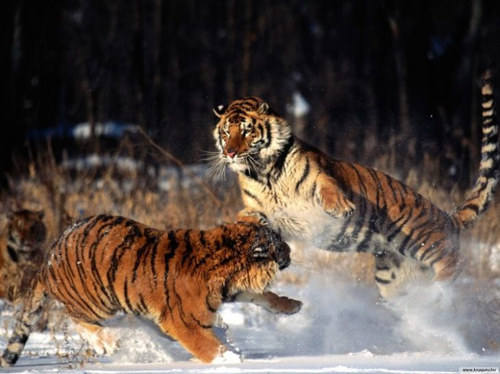 Хищники (106 фото)