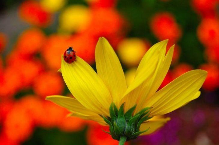 природа летом красивые картинки