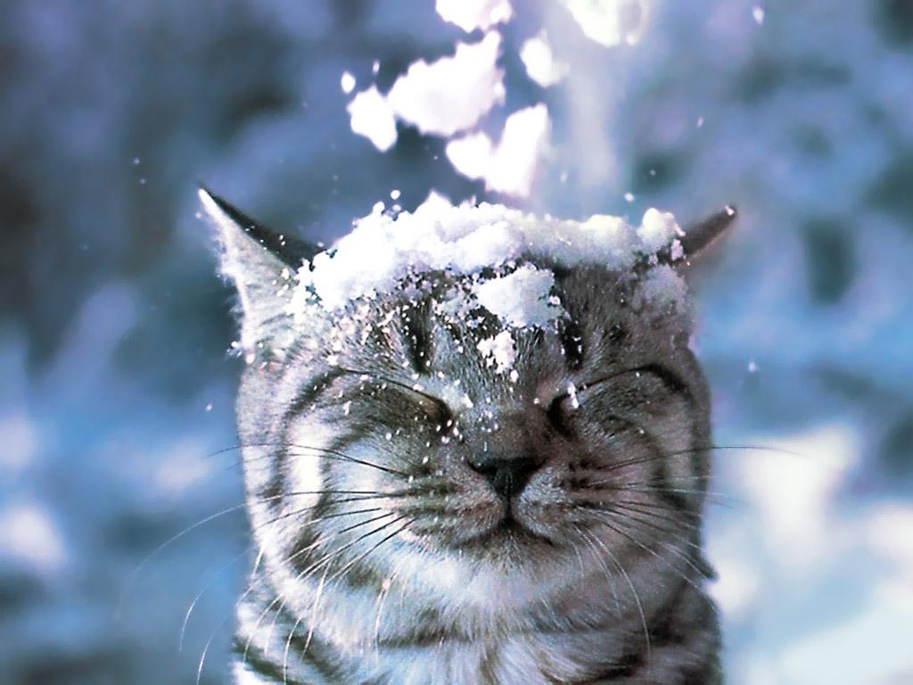 Зимние обои на рабочий стол природа и