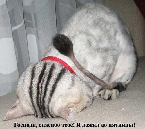 Господи, спасибо тебе! Я дожил до пятницы! » RadioNetPlus.ru ...