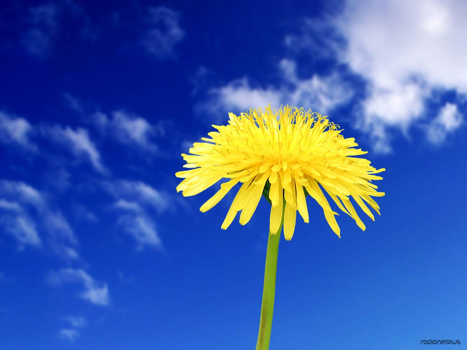 Цветы на рабочий стол 50фото