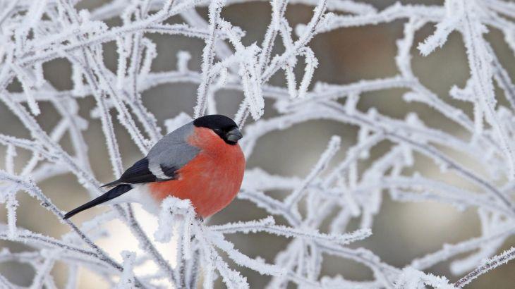 Зимние обои на рабочий стол: природа и морозец