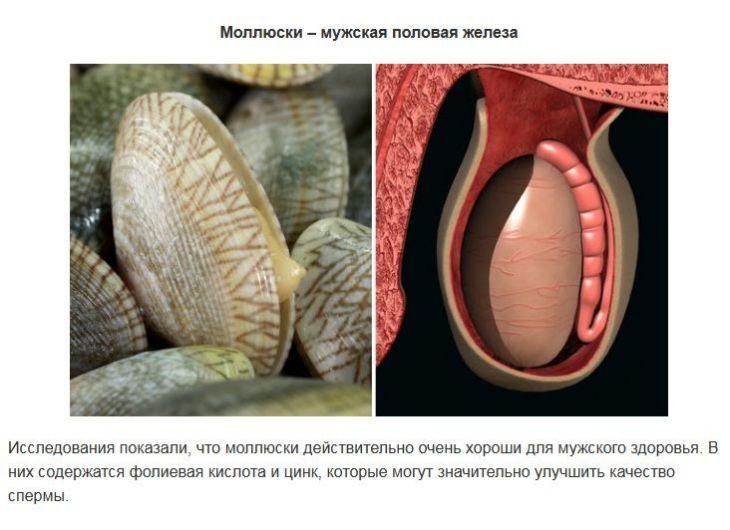 Продукты, похожие на части тела и полезные для них