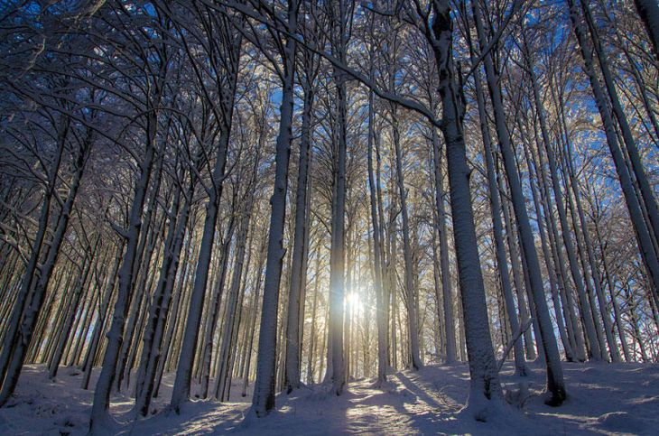 Зимние пейзажи (25 фото)