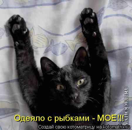 Видеоприколы про котов Самое смешное видео #2