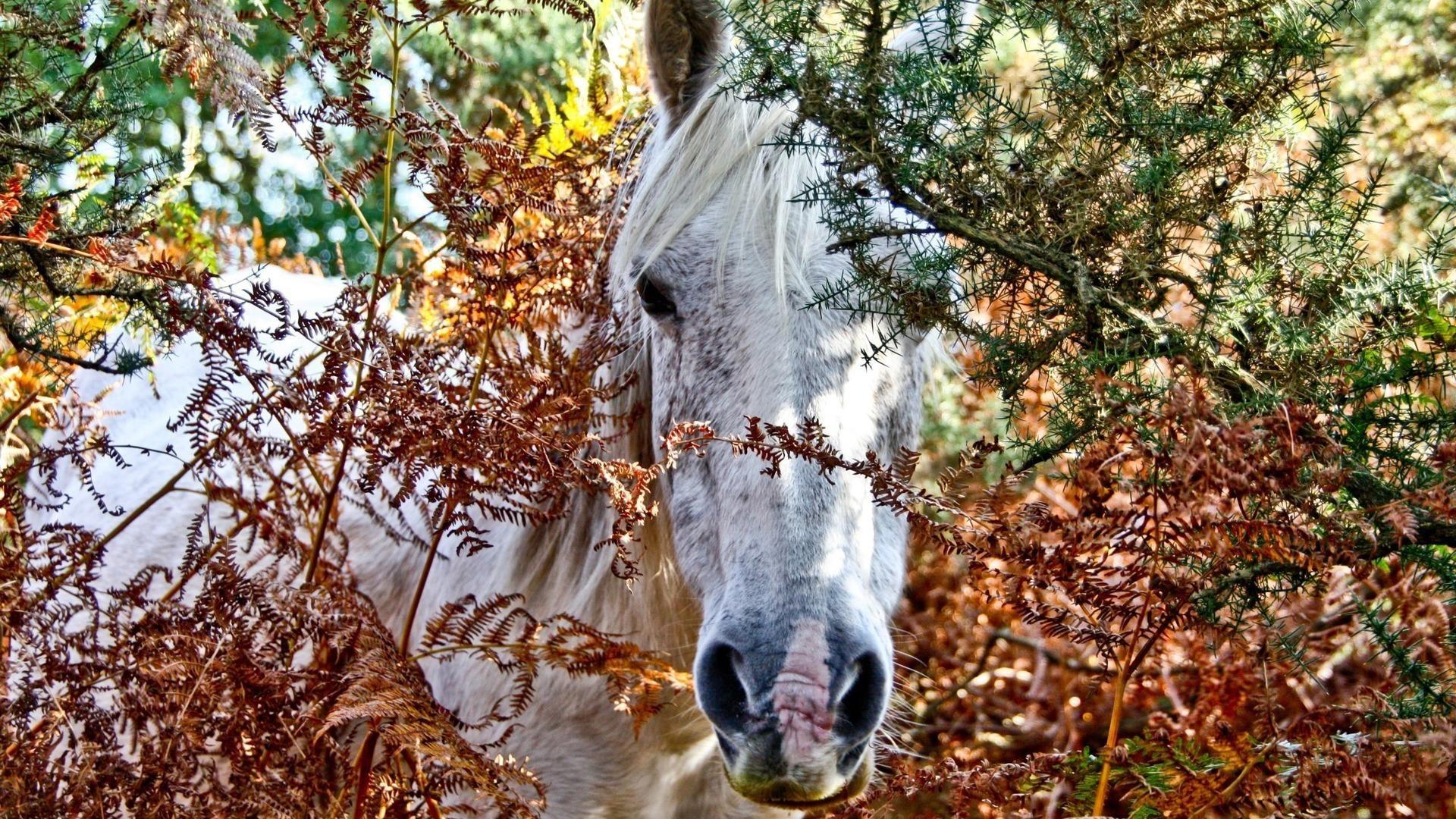 Лошадки картинки красивые