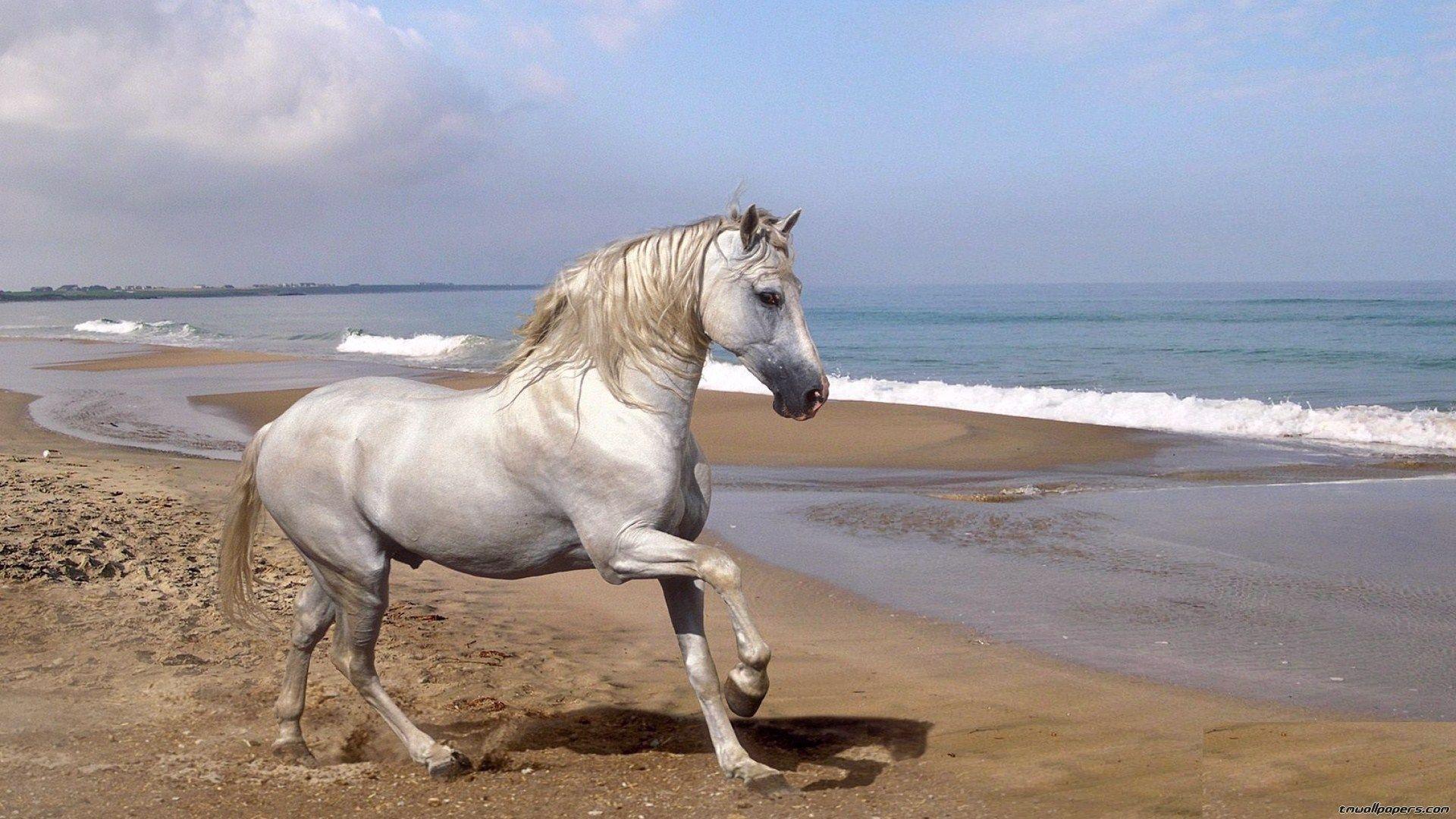 Фото кони лошади