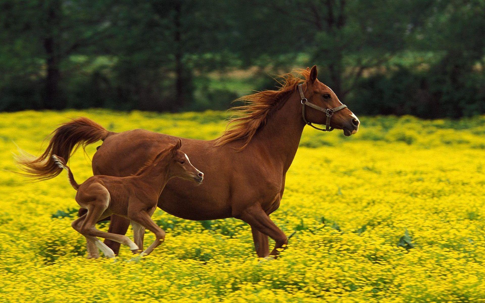 Картинки лошадки красивые