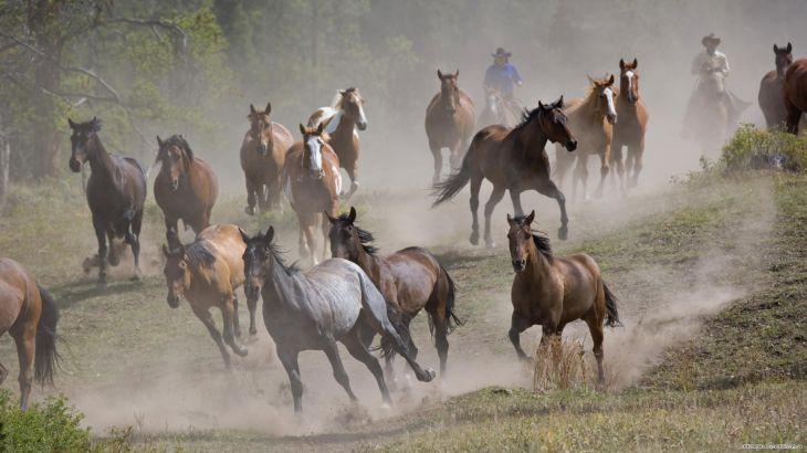 Красивые картинки на рабочий стол: Лошади (30 фото)