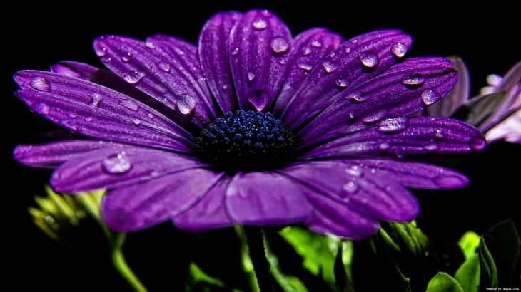 flower wallpaper beautiful - Quoteko.com