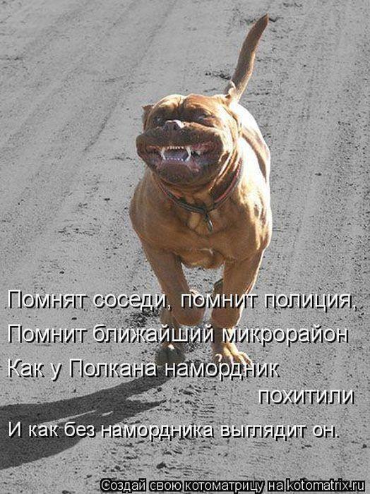 http://www.radionetplus.ru/uploads/posts/2013-02/1359702054_kotomatrix_08.jpg