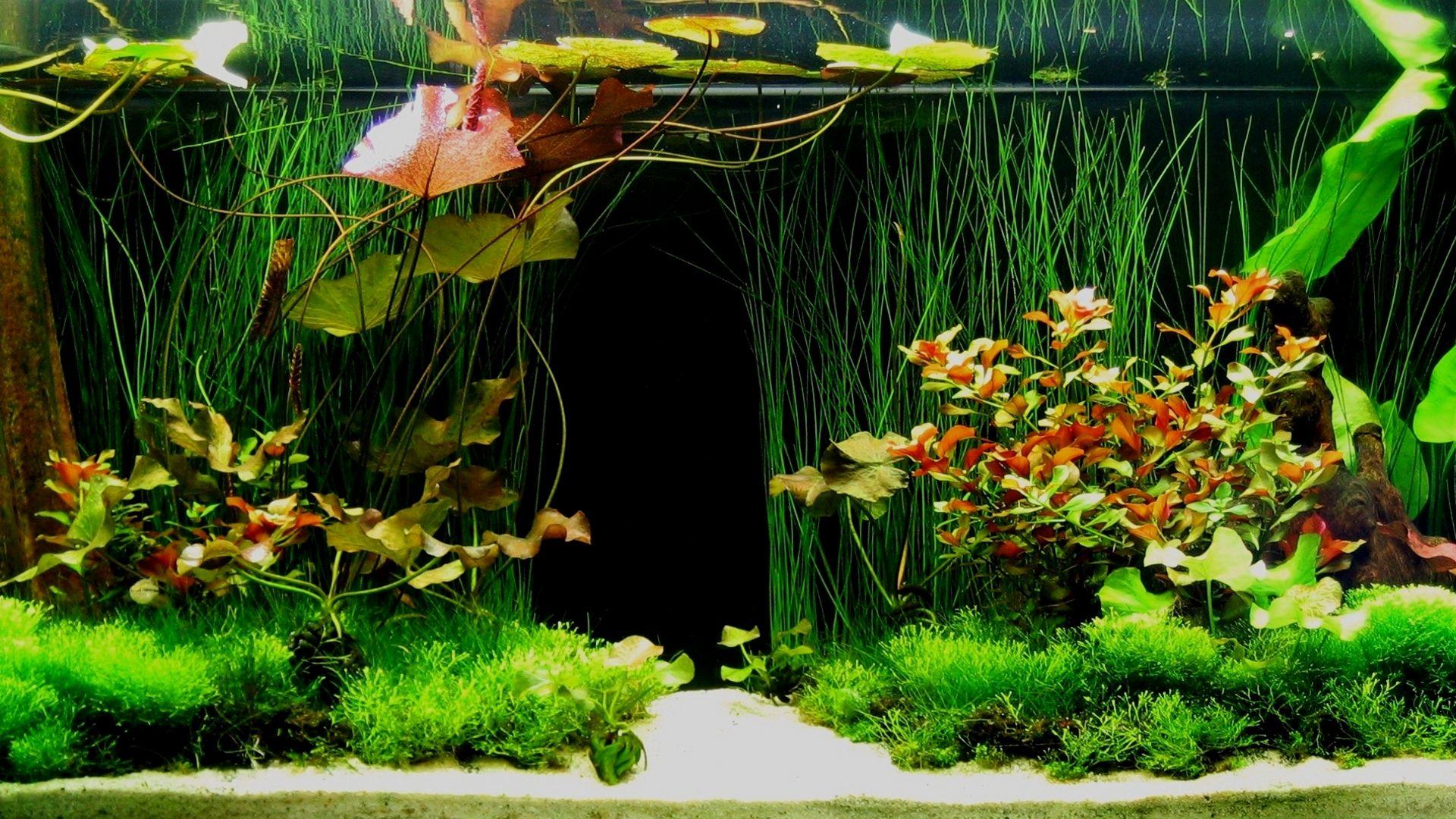Картинки для рабочего стола аквариум с рыбками 5