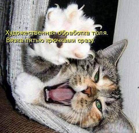 ...прикольные кошки и коты - Совершенно бесплатные фотки самых игривых котят - бесплатные приколы, кошки фото...