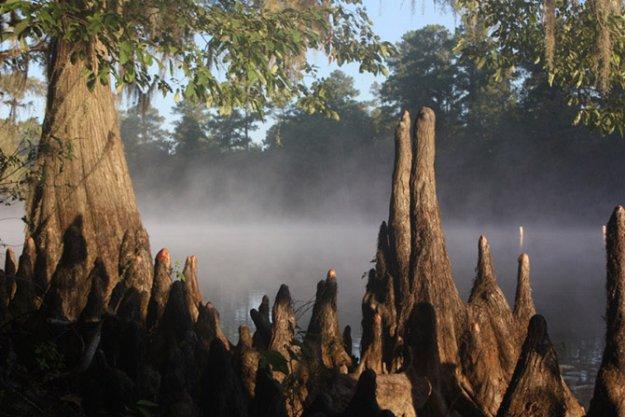 Озеро Каддо – крупное озеро в США
